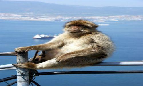 Zdjęcie HISZPANIA / Andaluzja / Gibraltar / A moze pora gdzies popłynąc..