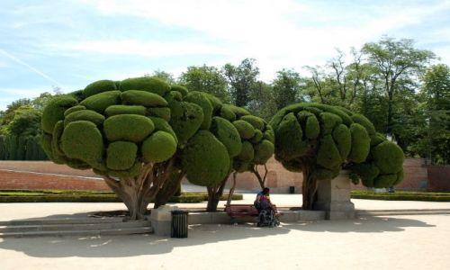 Zdjecie HISZPANIA / Madryt / Parque del Retiro, El Parterre, Cypress Trees. / Cyprysy.