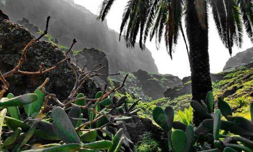 Zdjęcie HISZPANIA / Teneryfa / Masca / Rzut oka na wąwóz Masca