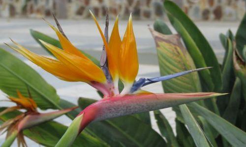 Zdjecie HISZPANIA / Gran Canaria / Puerto de Mogan / Multicolor!