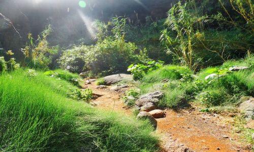 Zdjęcie HISZPANIA / Teneryfa / Masca / Ścieżka w dolinie