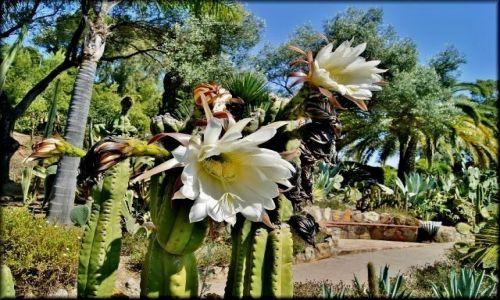 Zdjęcie HISZPANIA / Costa Brava / Pina Rosa, okolice Blanes / W Ogrodzie Pina Rosa
