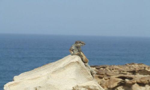 Zdjęcie HISZPANIA / Fuerteventura / Caleta de Fustes / Masz orzeszka?