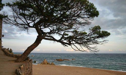 Zdjęcie HISZPANIA / Catalonia / Costa Brava/ Platja d'Aro / costa brava