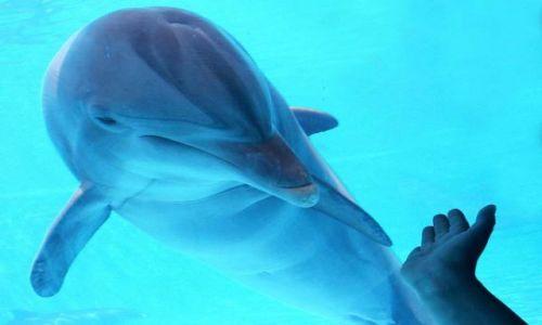 Zdjecie HISZPANIA / brak / La Palma, Majorka / Doobry delfinek