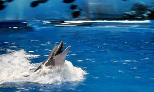 Zdjecie HISZPANIA / Catalonia / Barcelona/zoo / delfin