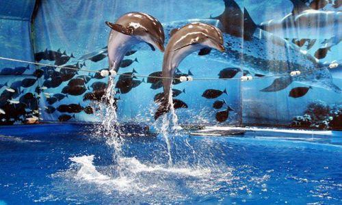 Zdjęcie HISZPANIA / Catalonia / Barcelona/zoo / delfiny