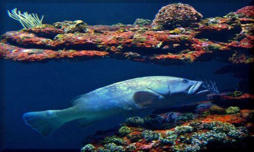 Zdjecie HISZPANIA / Majorka / Aqarium / W Aquarium Palma de Mallorka
