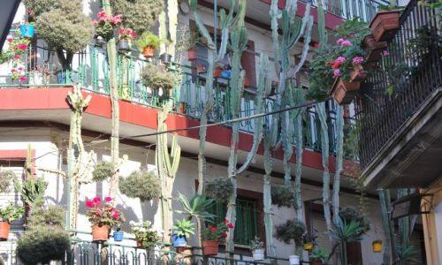 Zdjecie HISZPANIA / Katalonia / Calella / Kaktusy