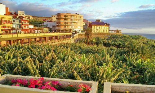 Zdjecie HISZPANIA / La Palma / Tazacorte / Bananowce w blasku słońca !