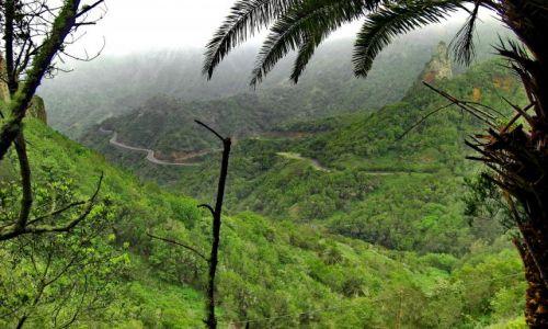 Zdjęcie HISZPANIA / La Gomera / Parc Garajonay - las Laurowy / Mała dżungla pod chmurami