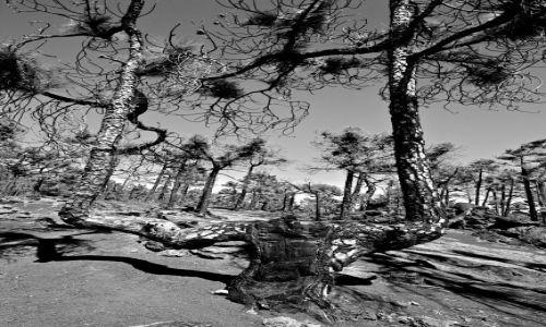 Zdjecie HISZPANIA / La Palma/Wyspy Kanaryjskie / okolice Fuencaliente.pld kraniec wyspy / rozdwojenie drzewni