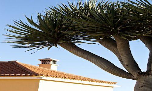 Zdjęcie HISZPANIA / LA Palma/Wyspy Kanaryjskie / fuencaliente / bez tytulu
