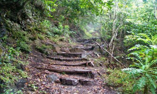 Zdjęcie HISZPANIA / La Palma / La Palma / Drewniane schodki przez dżunglę