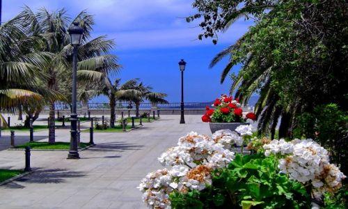 Zdjęcie HISZPANIA / La Palma / Los Llanos / Ogród kwiatowy w Los Llanos