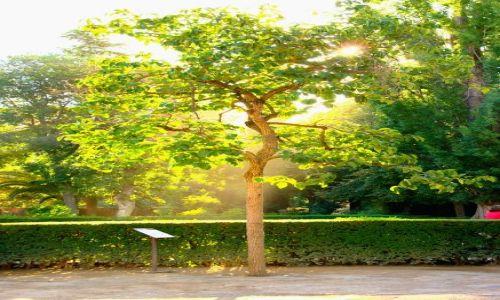 HISZPANIA / Andaluzja / Granada / drzewko szczęścia -Alhambra