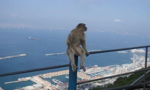 Zdjecie HISZPANIA / Poludniowa Hiszpania / Gibraltar / Gibraltar
