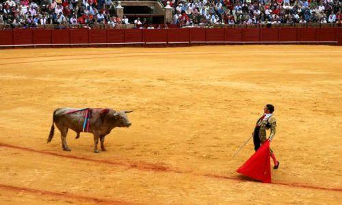 Zdjecie HISZPANIA / Andaluzja / Sevilla / Corrida de Toros