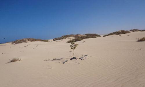 Zdjecie HISZPANIA / Wyspy Kanaryjskie - Fuerteventura / Parco Natural de Coralejo / Ruchome piaski koło Coralejo