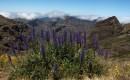 Zdjecie PORTUGALIA / Madera / Pico Do Arieiro / Bukiet w górach