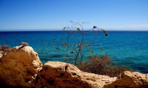 Zdjęcie HISZPANIA / Fuertaventura / costa calma / Fuerta