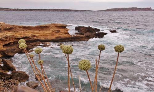 Zdjęcie HISZPANIA / - / Minorka / Na brzegu...