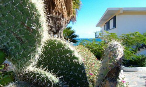 Zdjęcie HISZPANIA / Kanary / Las Palmas / Kaktus