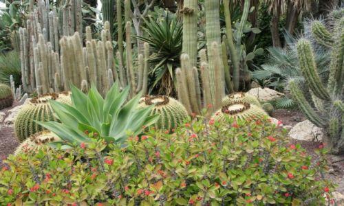 Zdjęcie HISZPANIA / Alicante / Elche / Kaktusy