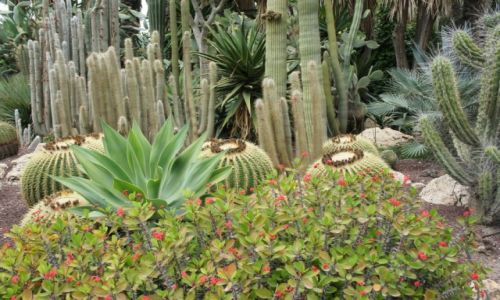 HISZPANIA / Alicante / Elche / Kaktusy
