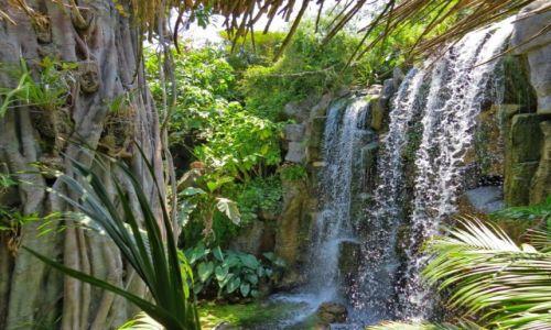Zdjecie HISZPANIA / Majorka / Majorka / Wodospad w lesie deszczowym