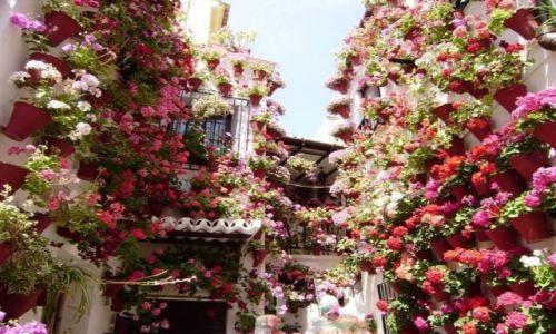 Zdjęcie HISZPANIA / Andaluzja / Cordoba / W cudne kwiaty zaplatane...