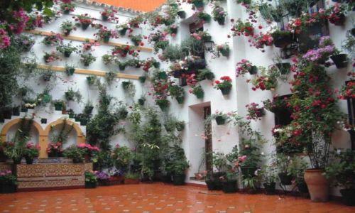 Zdjecie HISZPANIA / Andaluzja / Cordoba / W  kwiatowej krainie