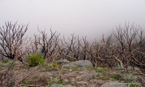 Zdjęcie HISZPANIA / Wyspy kanarysjkie / La Gomera / La Gomera po pożarach