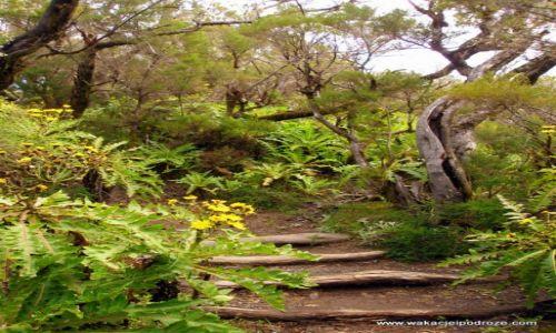 Zdjęcie HISZPANIA / Wyspy kanarysjkie / La Gomera / Garajonay