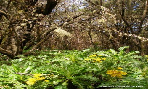 Zdjęcie HISZPANIA / Wyspy kanarysjkie / La Gomera / Dżungla na La Gomerze