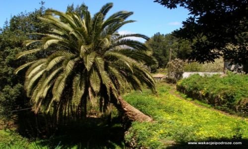 Zdjęcie HISZPANIA / Wyspy kanarysjkie / La Gomera / Dolina Hermigua