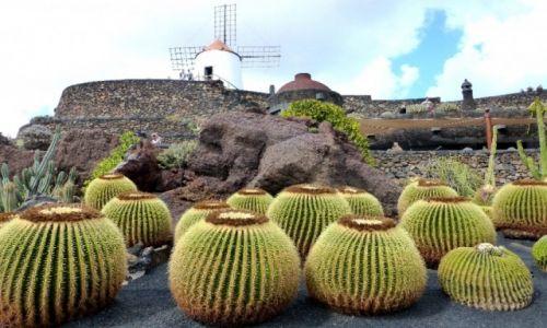 Zdjecie HISZPANIA / Wyspy Kanaryjskie / Lanzarote / Ogród kaktusów