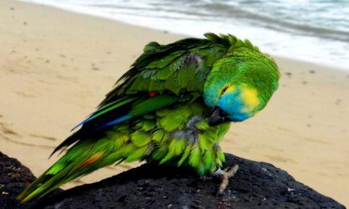 Zdjecie HISZPANIA / Wyspy Kanaryjskie / Lanzarote / papuga