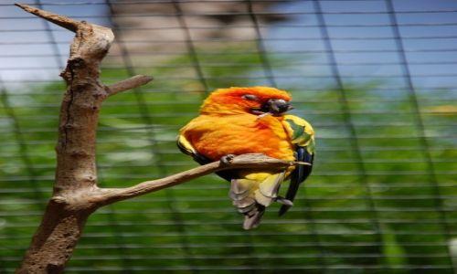 Zdjecie HISZPANIA / - / Gran Canaria. / Orange.