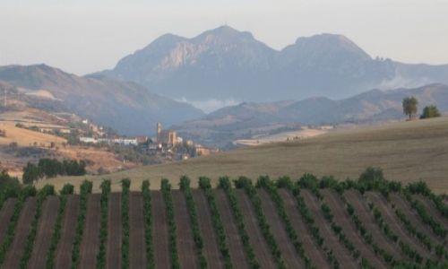 HISZPANIA / Camino de Santiago / La Rioja  / Uprawy winorośli
