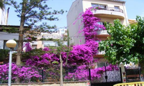 Zdjęcie HISZPANIA / Costa del Maresme / Calella / Calella