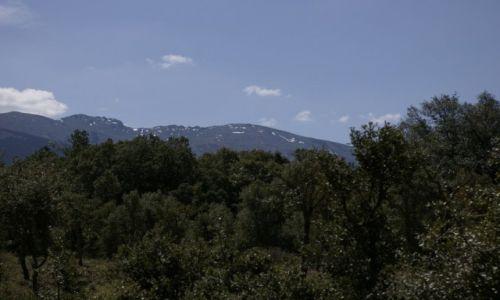 Zdjecie HISZPANIA / - / Montes de Valsain / Sosny
