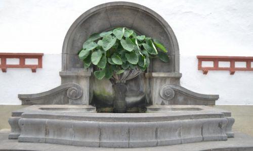 Zdjecie HISZPANIA / Teneryfa-wyspy kanaryjskie / Polnoc Wyspy / Ozdoba