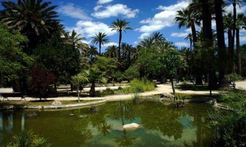 Zdjęcie HISZPANIA / Alicante / Elche / Palmowy ogród
