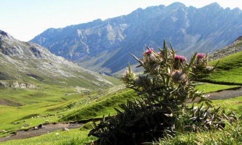 Zdjęcie HISZPANIA / Picos de Europa / Aliva / oset