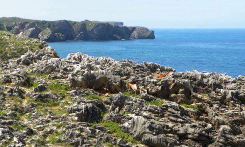 Zdjęcie HISZPANIA / Asturia / okolice Llanes / dzikie kozy