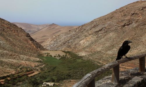 Zdjęcie HISZPANIA / Fuerteventura/Wyspy Kanaryjskie / Vega de Rio Palmas / Strażnik