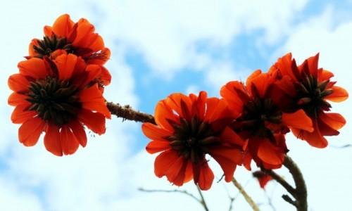 Zdjęcie HISZPANIA / Fuerteventura/Wyspy Kanaryjskie / Oasis Park / Jakie to drzewo i jaki kwiat? Kto pomoże?