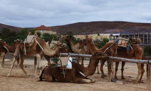 Zdjęcie HISZPANIA / Fuerteventura/Wyspy Kanaryjskie / Oasis Park / Parkowisko