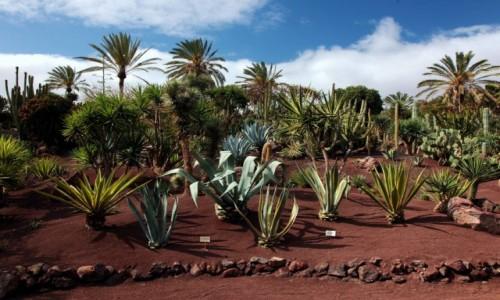 Zdjęcie HISZPANIA / Fuerteventura/Wyspy Kanaryjskie / Oasis Park / Egzotyczny ogród